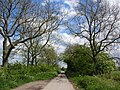 Lane to Poppleton - geograph.org.uk - 431696.jpg