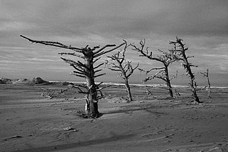 Humboldt County, California - The Lanphere Dunes, a protected coastal environment