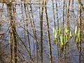 Marais de Larchant