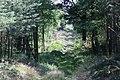 Lasy Łączańskie - panoramio.jpg