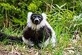 Lemur (26618684887).jpg