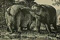 Les accouchements dans les beaux-arts, dans la littérature et au théatre (1894) (14594882208).jpg