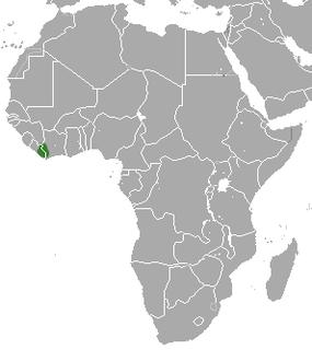 Liberian mongoose species of mammal