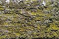 Lichen DSC00602.JPG