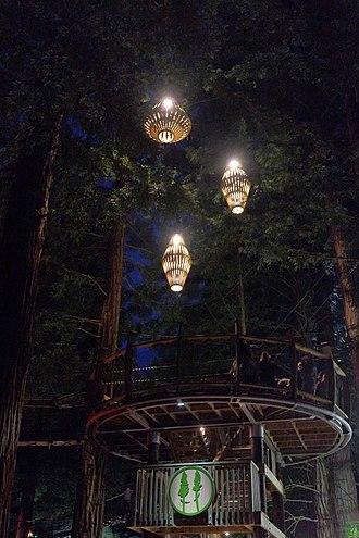 Redwoods Forest, Whakarewarewa - Redwoods Treewalk at night