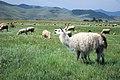 Livestock21.tif (37987944715).jpg