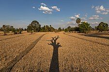 Long shadow of a dead tree with its branches on the dry fields of Laos - landscape.jpg