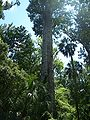 Longwood Senator Park Big01.jpg