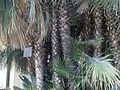 Lorto-botanico-di-padova-2016 28340423396 o 09.jpg