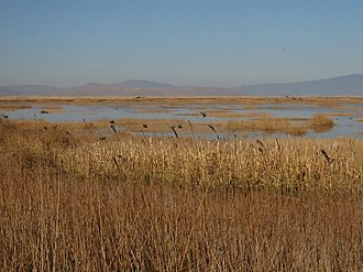 Lower Klamath Lake - Freshwater marsh on Lower Klamath Lake