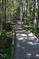 MRNP — Kautz Creek Trail (21255399814) (2).jpg