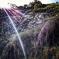 Madeira Levada walks (28704607842).jpg