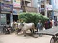 Madurai 04.jpg
