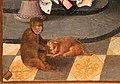 Maestro del gruppo dell'adorazione di anversa, davide che riceve l'acqua di betlemme e salomono e la regina di saba, 1515-20 ca. 02 scimmia e cane.jpg