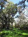 Magnolia Plantation and Gardens - Charleston, South Carolina (8555480231).jpg