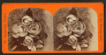 Magnolia blossoms and Gray moss, from Robert N. Dennis collection of stereoscopic views.png