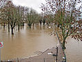 Main-hochwasser-2011-13-of-018.jpg