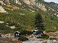 Maliovica Pinus peuce1.jpg