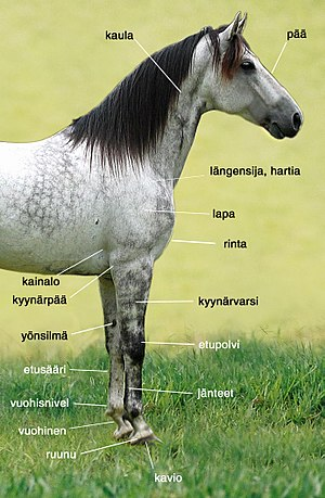 Hevosen Rakenne
