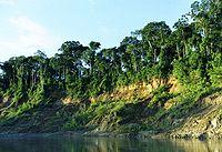 Manu riverbank.jpg