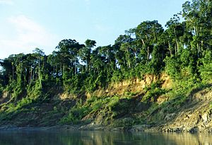 Manú National Park - View of a riverbank in Manu National Park