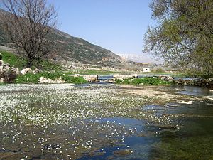 Beqaa Valley - Aammiq wetlands