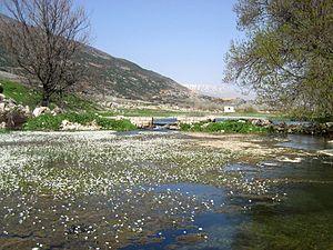 Beqaa Valley - Aammiq wetlands