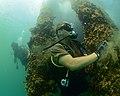 Maritime improvised explosive device (IED) familiarization dive, RIMPAC 2014 140723-N-TM257-207.jpg