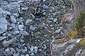 Marmot (15285340505).jpg