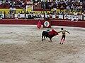 Matador faces off against a bull in Mexico 2006.jpg