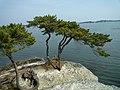 Matsushima(松島) - panoramio (2).jpg