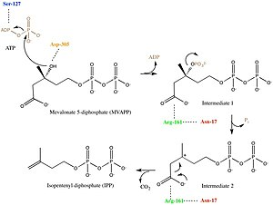 Diphosphomevalonate decarboxylase - Image: Mechanism for Mevalonate Diphosphate Decarboxylase