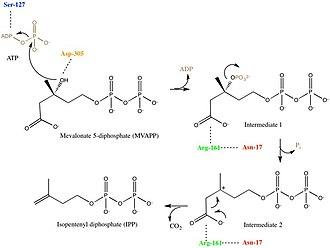 Diphosphomevalonate decarboxylase - Image: Mechanism for Mevalonate Diphosphate Decarboxylase