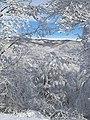 Medvednica in winter.jpg