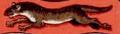 Menyét (heraldika).PNG