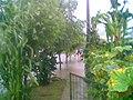 Mi vereda, mi huerta-jardín - panoramio.jpg