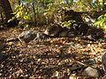 Minnehaha Park in autumn 10.jpg