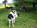 Monarchs Way near Chidden - geograph.org.uk - 1330350.jpg