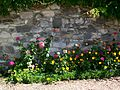 Montagny-Ste-Félicité (60), bord de chemin fleuri.jpg