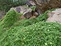 Monte Graciosa-Flore (2).JPG