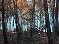 Monte queimado Brión Galicia.jpg