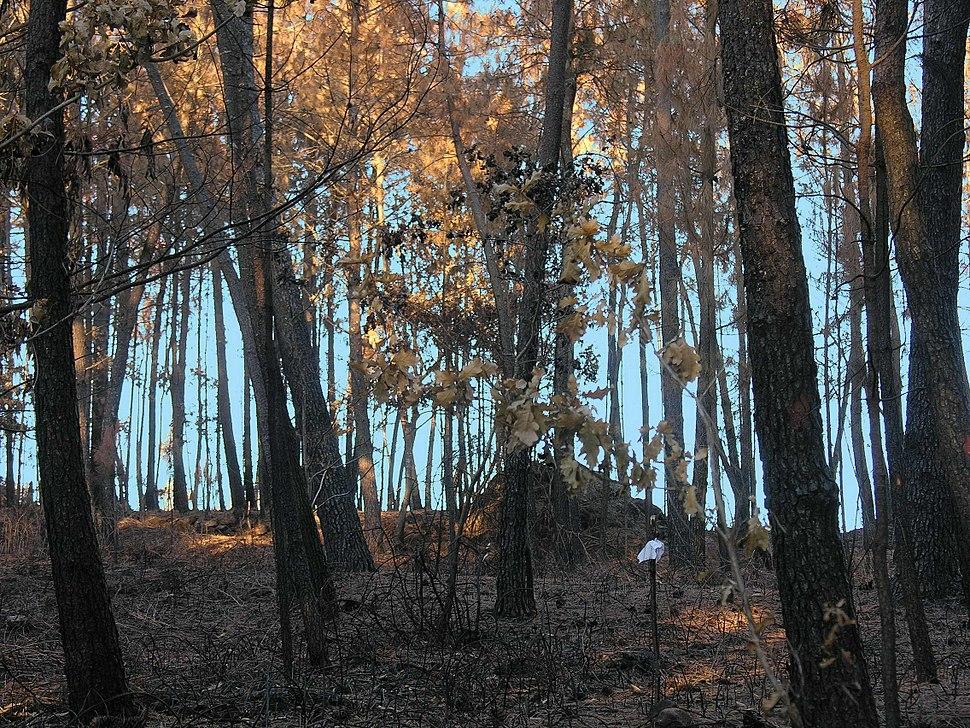 Monte queimado Brión Galicia