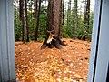 Moose antler.jpg