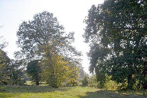 Morden Park (park) - Image: Morden 8 Trees in Morden Park geograph 2376588 by Ben Brooksbank