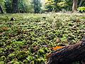 Moss carpet (8105250534).jpg