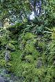 Mossy (8059755694) (2).jpg