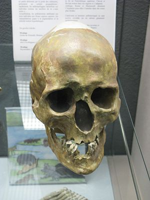 Chancelade man - Cast of skull of Chancalade man