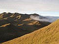 Mt. Pulag grass at sunset.jpg
