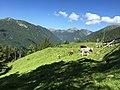 Mucche, Malga Cere, Telve.jpg