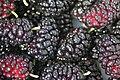 Mulberry 1.jpg